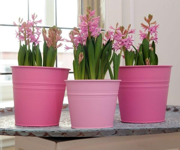 flores de jacinto para interiores