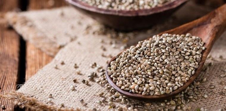semillas de cáñamo rica en proteinas