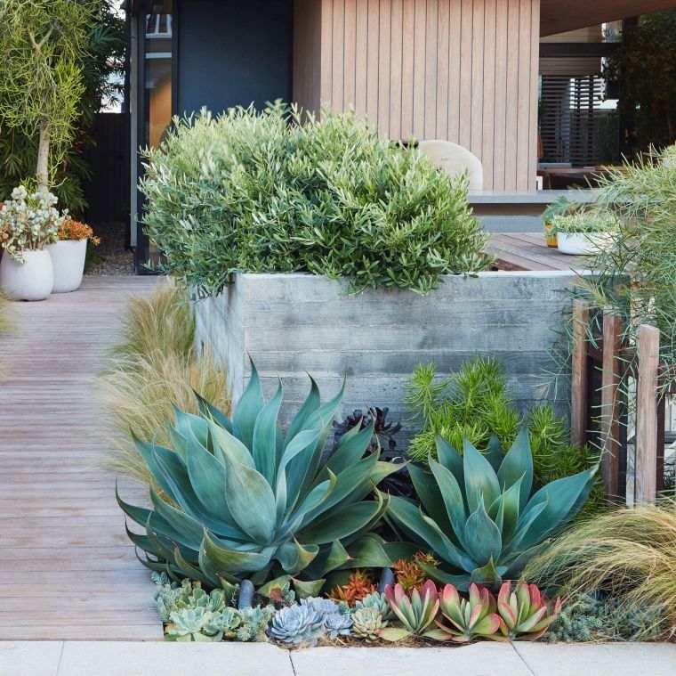 Jardín seco-contemporaneo-moderno
