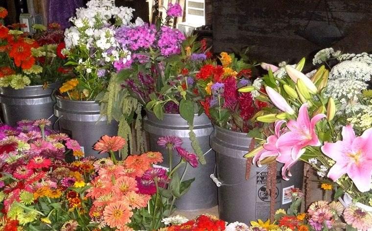 plantas de sol para jardin verano