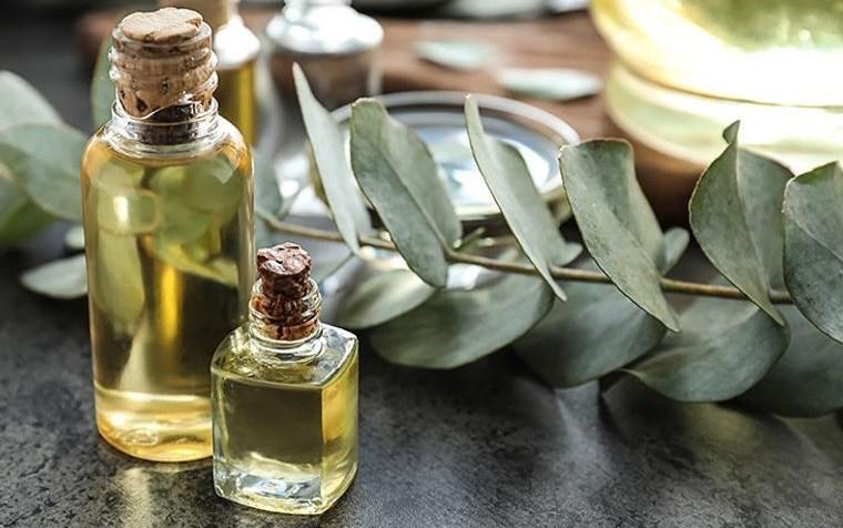 hormigas en casa eliminar con aceite esencial eucalipto