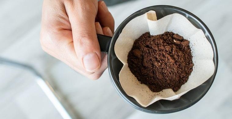 hormigas en casa eliminar con posos de cafe