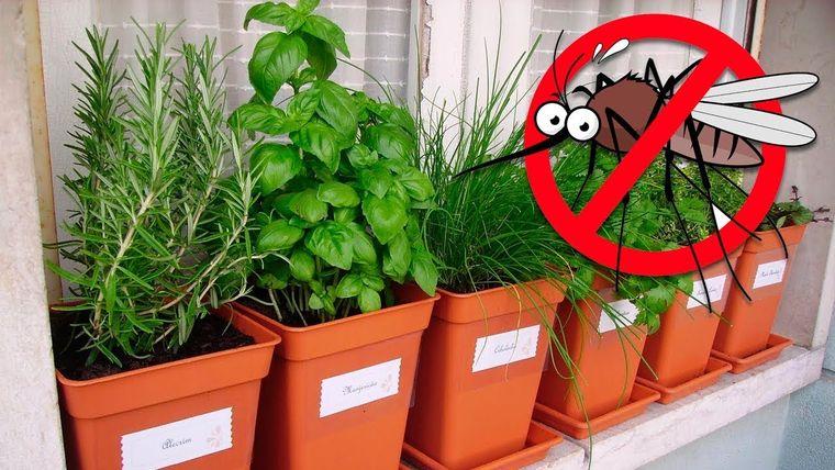 mosquitos eliminados plantas de interior
