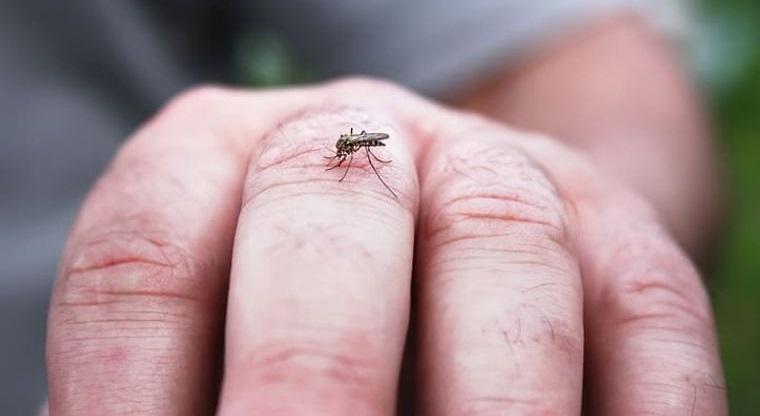 Mosquitos – Cómo lidiar con ellos de manera natural