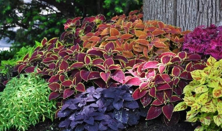 plantas de sombra para jardin