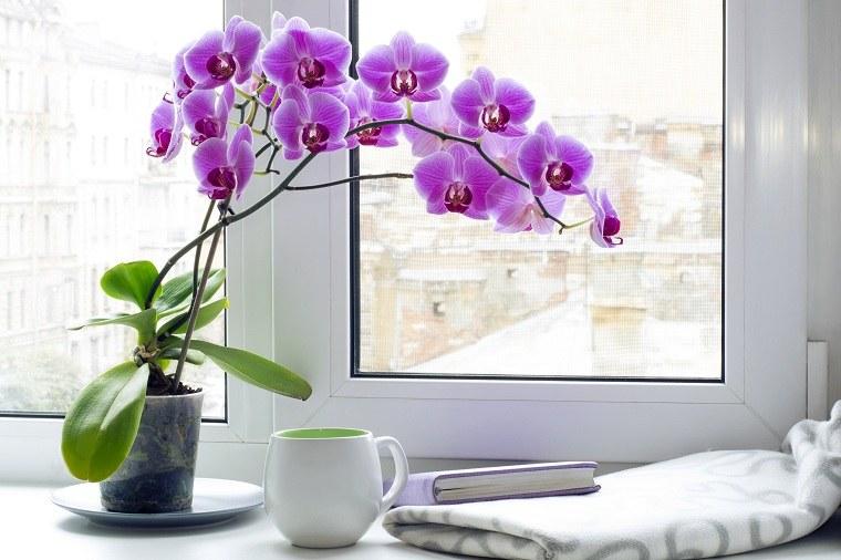 Cultivo de orquideas casa-consejos