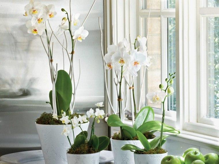 Cultivo de orquideas-casa-flores