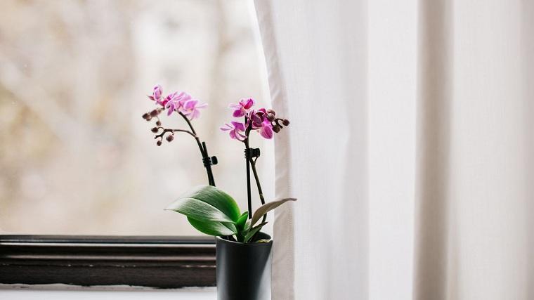 Cultivo de orquideas-casa-ideas