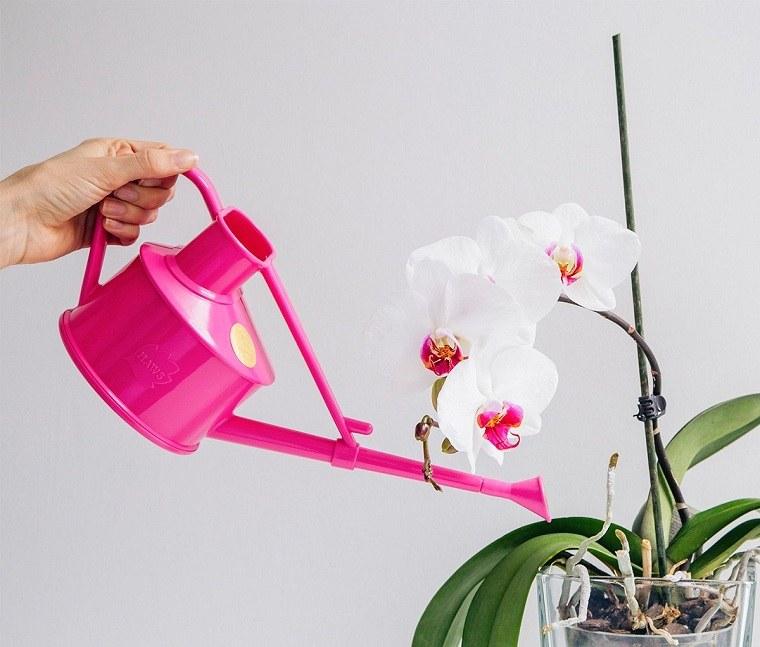 Cultivo-de-orquideas-casa-planta-agua