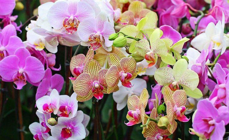 Cultivo de orquideas casa-plantas-diferentes