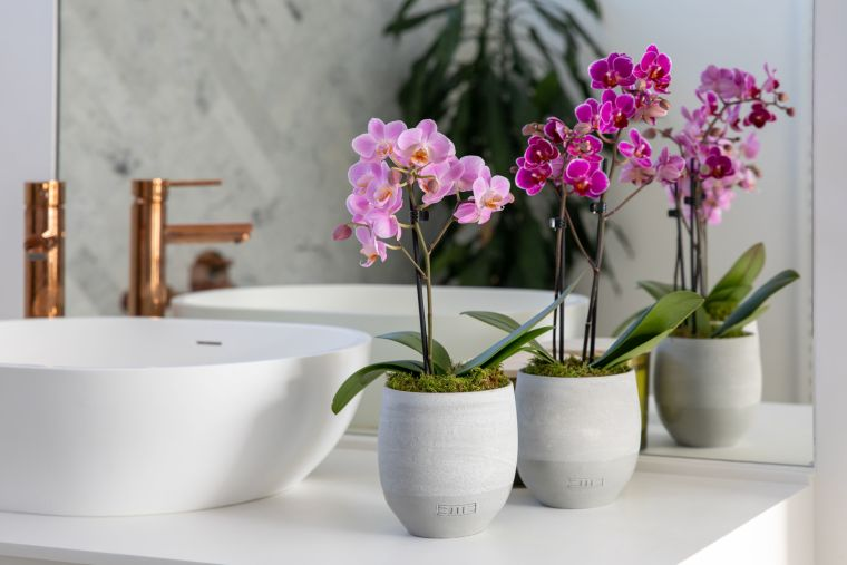 Cultivo-de-orquideas-casa-plantas