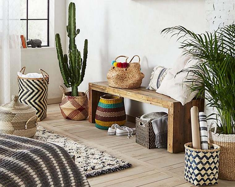 cactus de interior aspecto natural