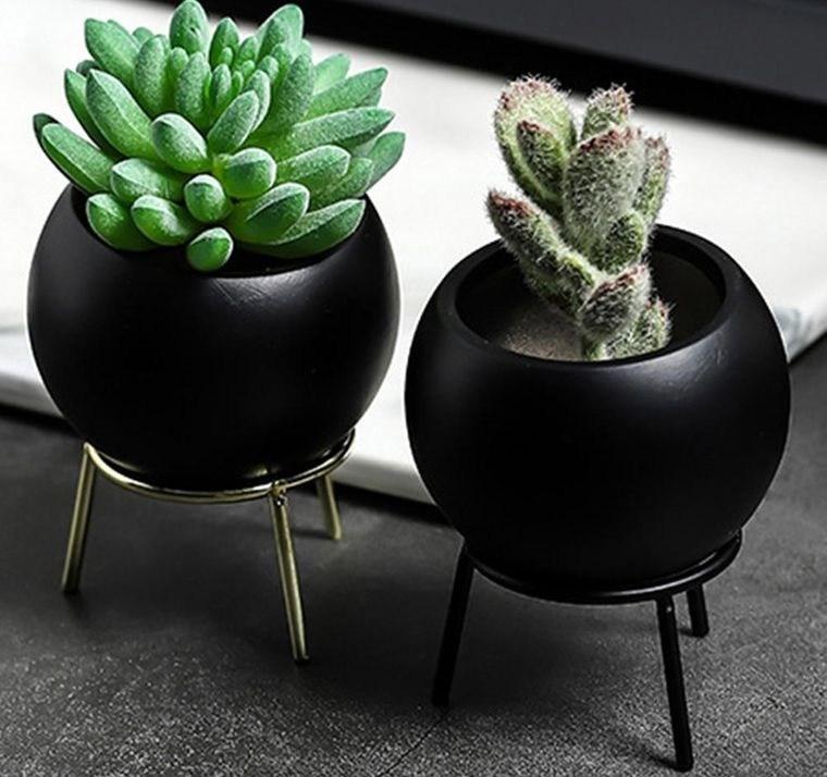 cactus de interior decoracion elegante