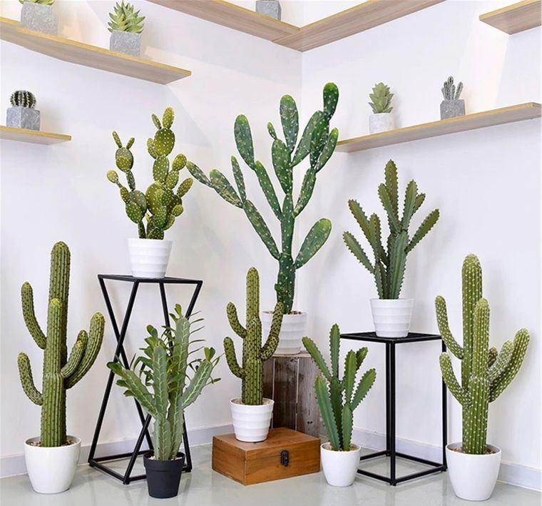 cactus de interior decoracion llamativa