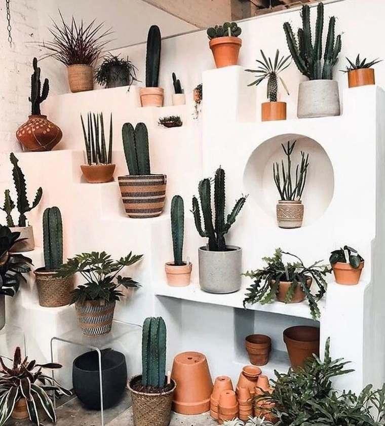 cactus de interior decoracion original