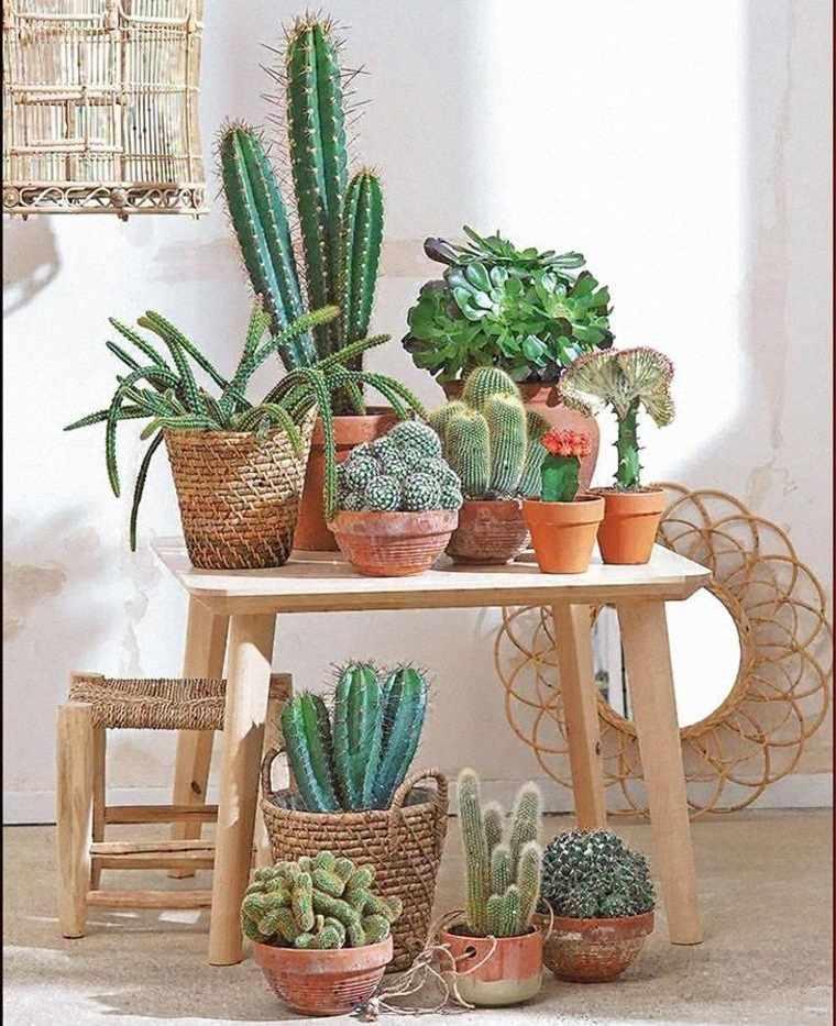cactus de interior decoracion rustica