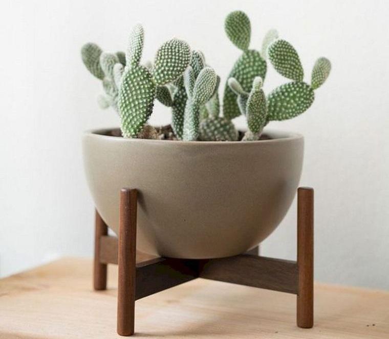 cactus de interior decoracion sencilla
