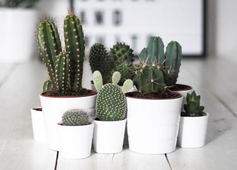 cactus de interior decoracion