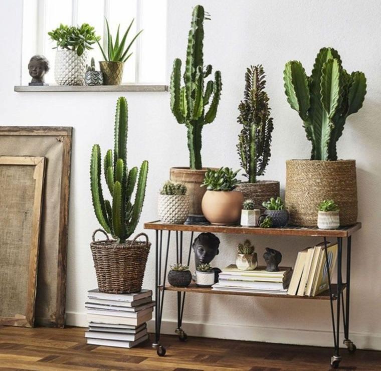 cactus de interior decorar espacio