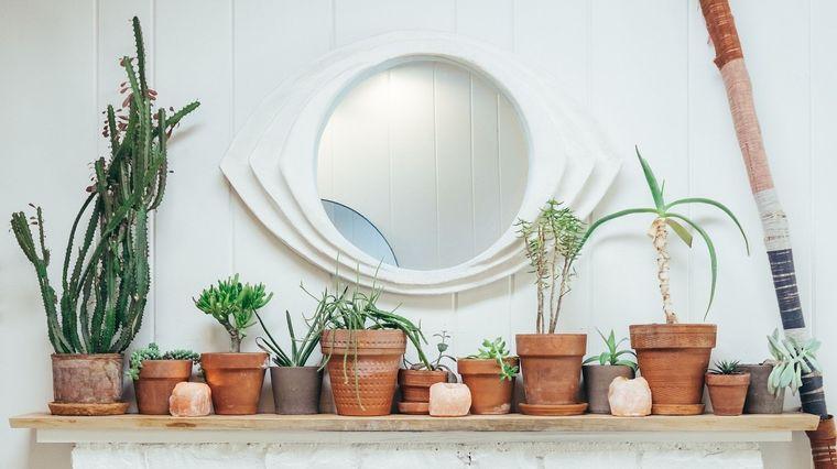 cactus de interior decorar repisa