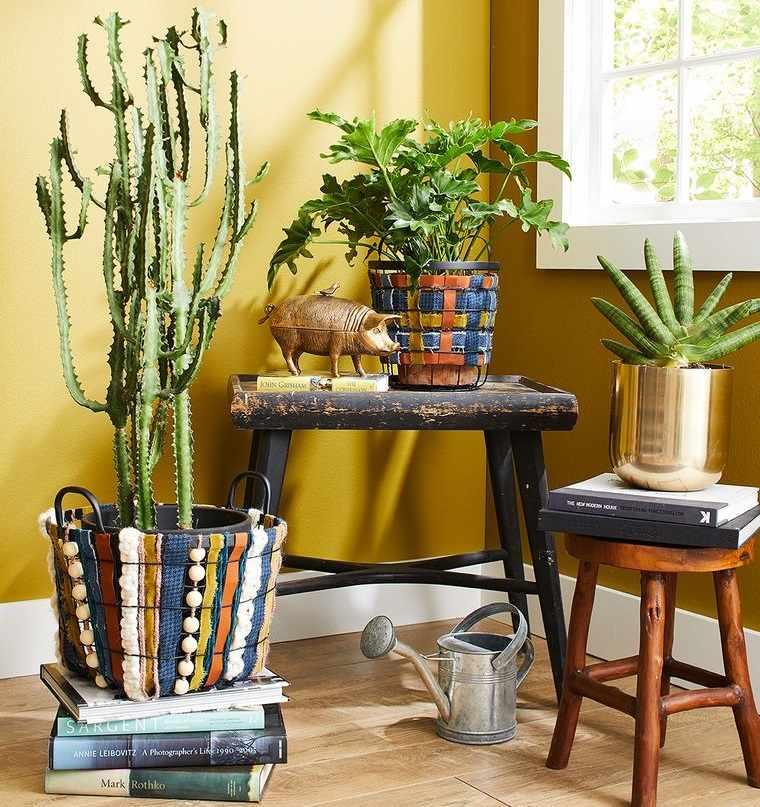 cactus de interior decorar rincon