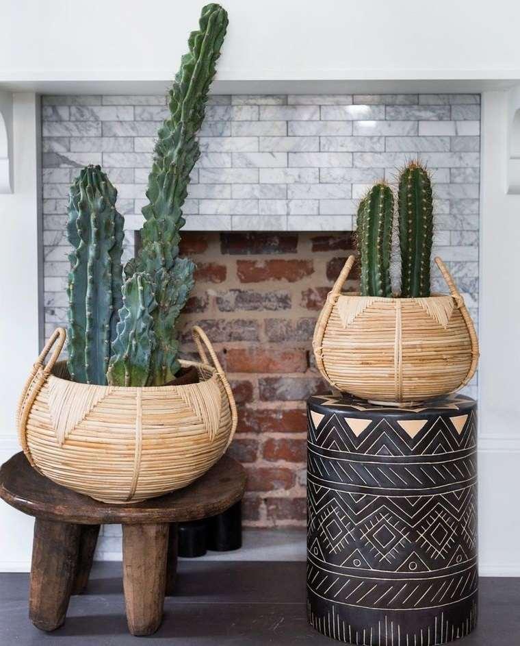 cactus de interior en cesta tejida