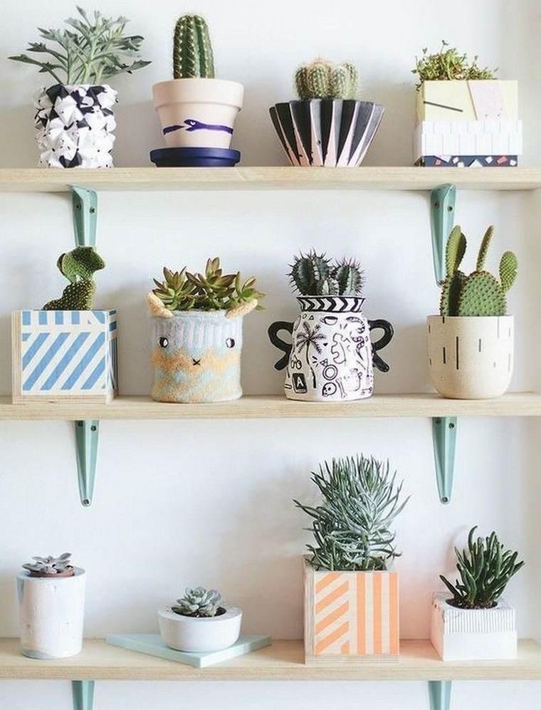 cactus de interior en estanteria