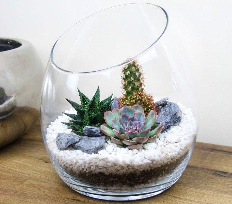 cactus de interior en florero de vidrio