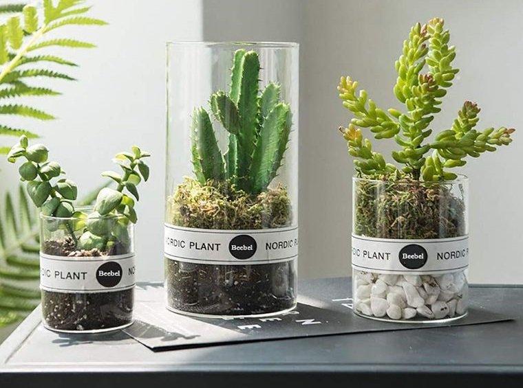 cactus de interior en jarron de vidrio
