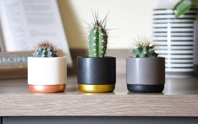 cactus de interior en macetas elegantes