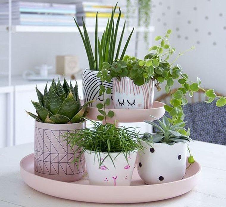 cactus de interior en materos pintados