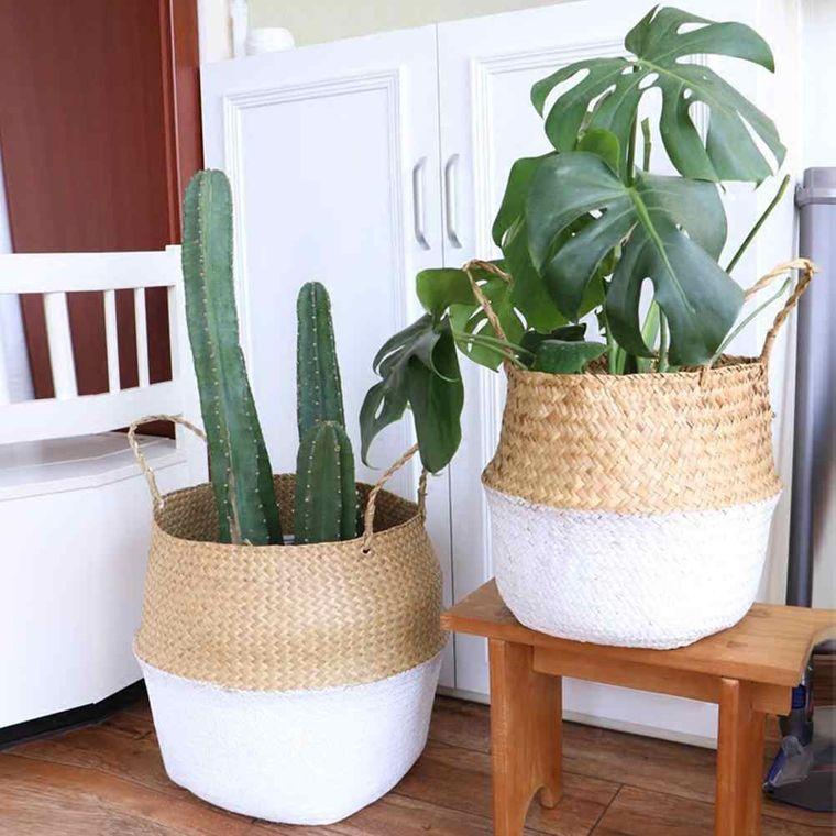 cactus de interior en una cesta tejida