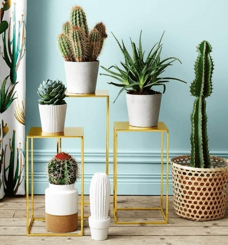 cactus de interior facil mantenimiento