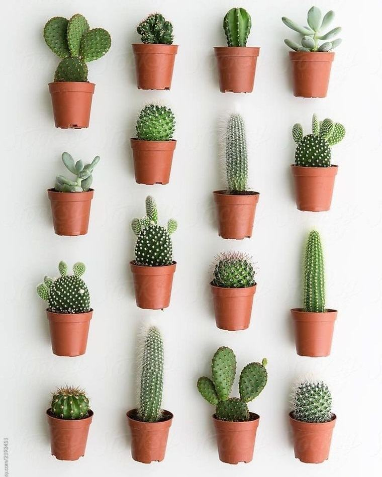 cactus de interior macetas en pared