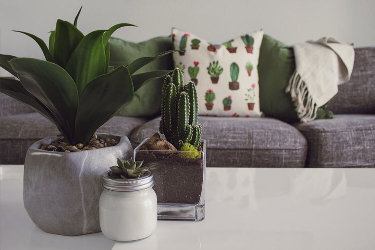 cactus de interior para decorar mesa