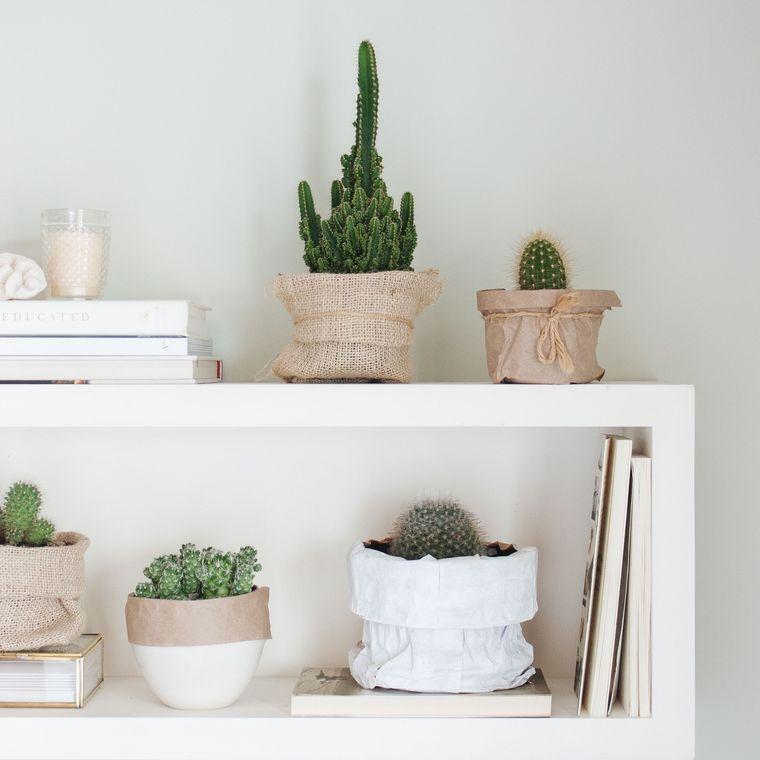 cactus de interior para espacio escandinavo