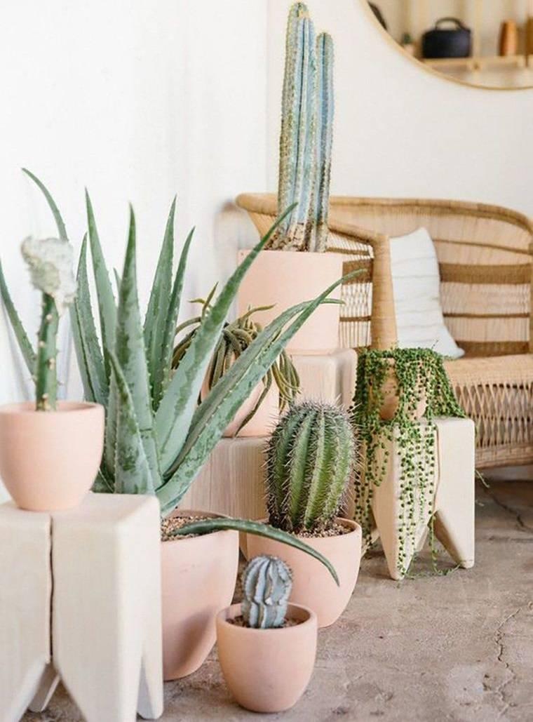 cactus de interior para hogar rustico