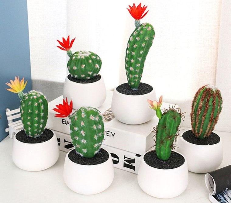 cactus de interior plantas pequeñas