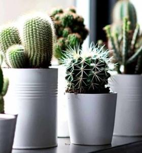 cactus-macetas-luz-consejos