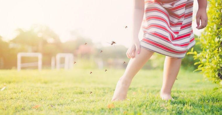 cómo ahuyentar mosquitos al aire libre