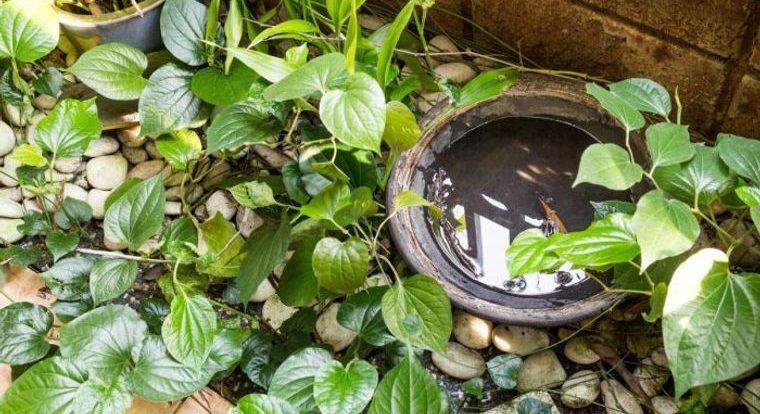 cómo ahuyentar mosquitos eliminar agua estancada