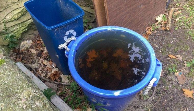 cómo ahuyentar mosquitos eliminar aguas estancadas