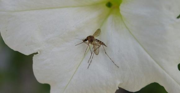 cómo ahuyentar mosquitos en jardin