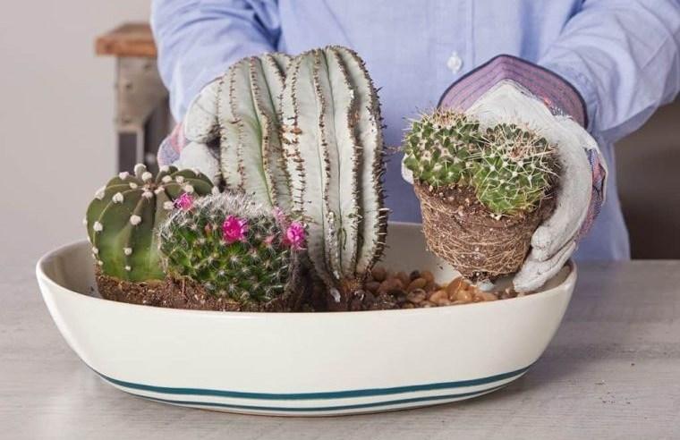 cómo cuidar un cactus consejos