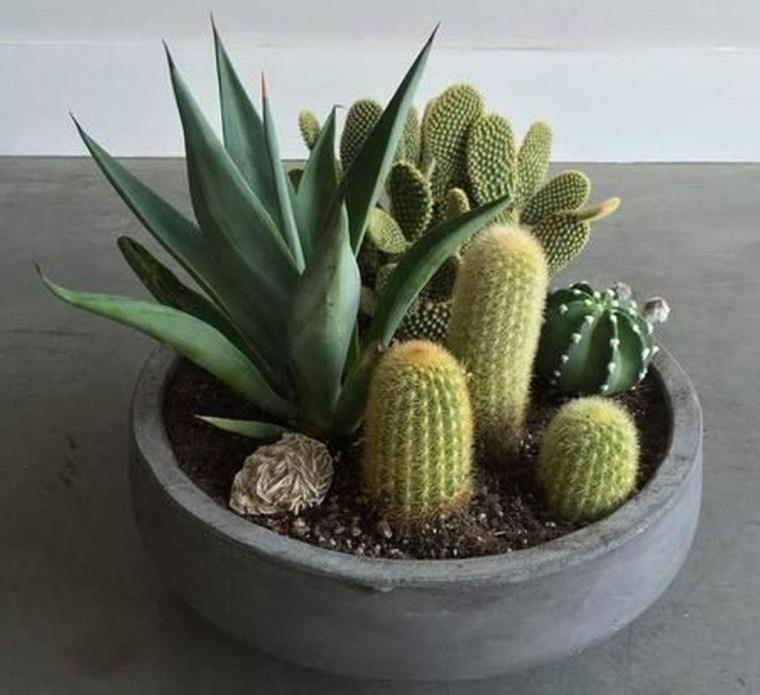 cómo cuidar un cactus en casa