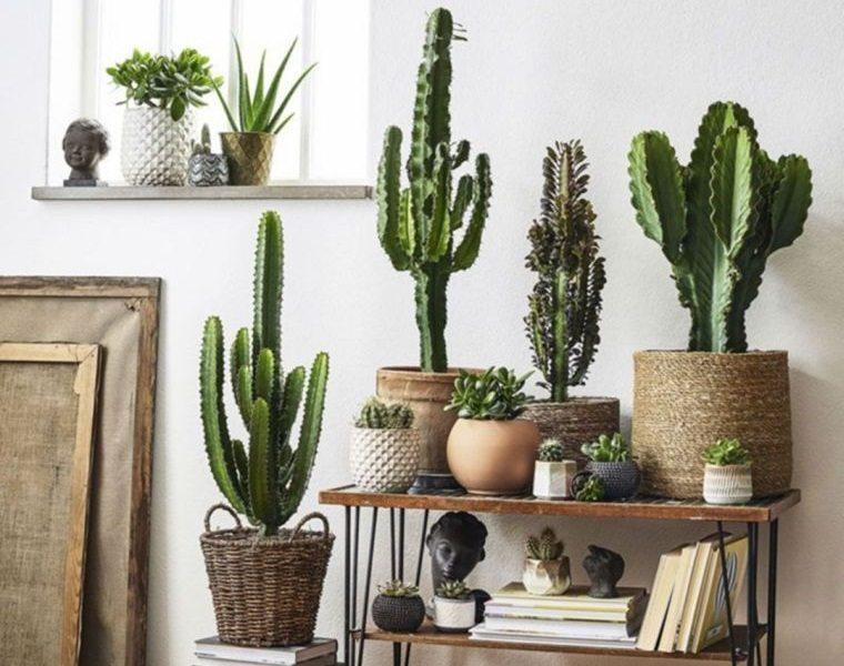 cómo cuidar un cactus en interior hogar