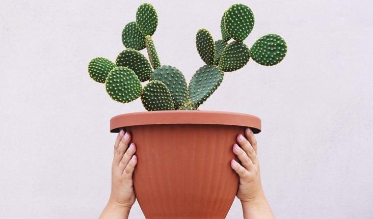 cómo cuidar un cactus para que prospere