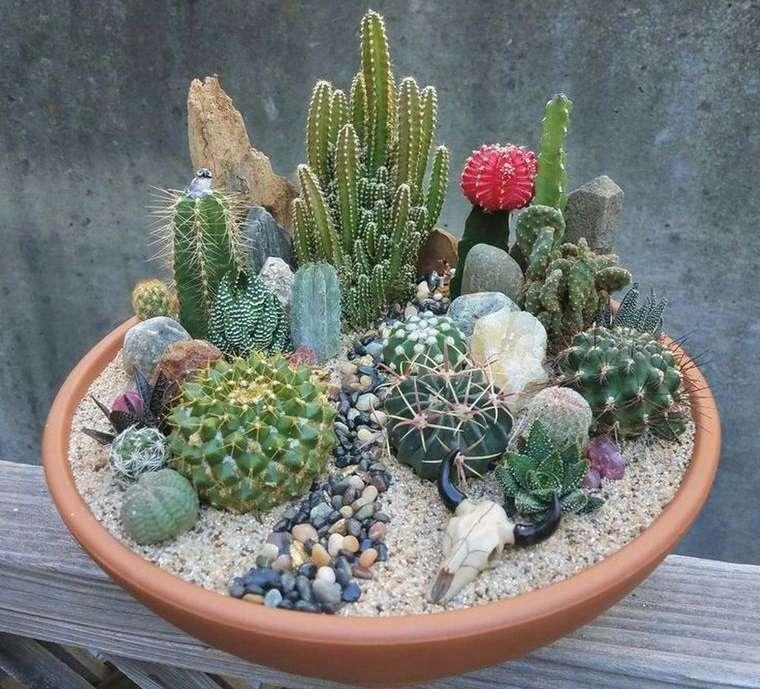 cómo cuidar un cactus pequeño en maceta