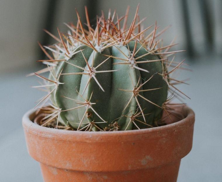 cómo cuidar un cactus pequeño
