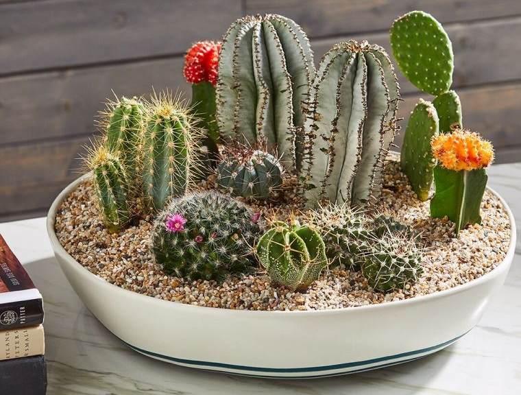 cómo cuidar un cactus por mucho tiempo
